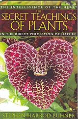 Secret Teachings of Plants Book