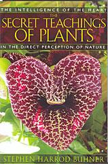 Secret Teachings of Plants Book